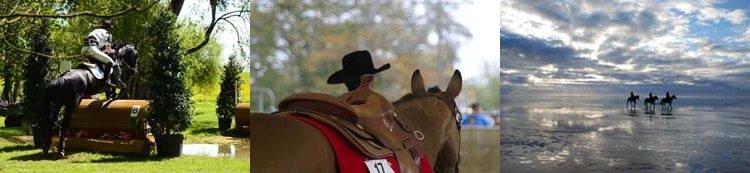 pferdeosteopathie, chiropraktik pferde, pferdephysiotherapie
