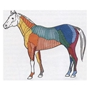 headzonen pferd