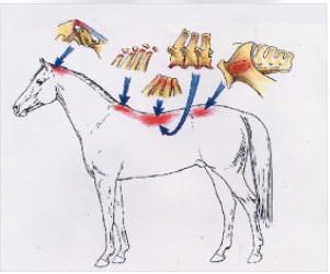 die häufigsten betroffenen strukturen durch osteopathische blockaden beim pferd