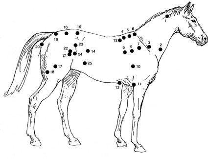 stresspunkte pferde
