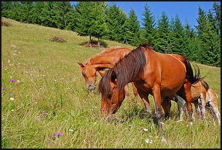 Pferde, fohlen, weide, kräuterweide