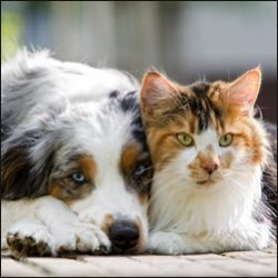 hundeosteopathie, katzenosteopathie, osteopathie hund, osteopathie katze