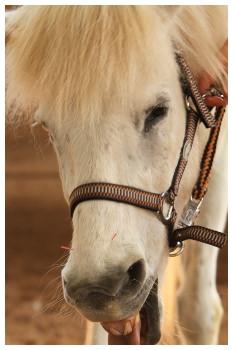 pferdeosteopathie hilft, guter pferdeosteopath