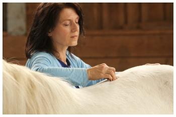 osteopathische behandlung pferd