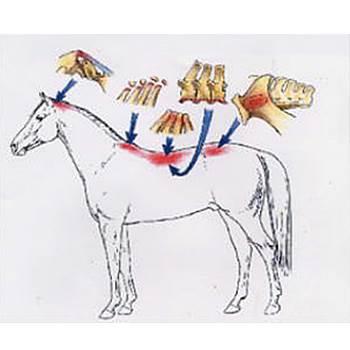 genickblockade pferd, isg blockade pferd, wirbelblockade pferd