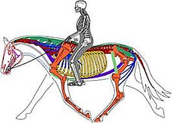 pferdephysiotherapie, hundephysiotherapie, katzenphysiotherapie