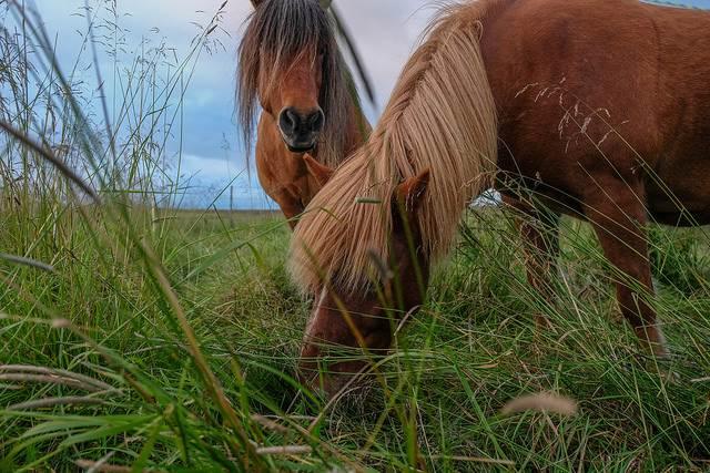 einfühlsame pferdeosteopathin, welcher pferdeosteopath